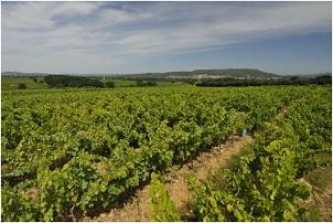 Vignerons_Laudun_Chusclan.jpg